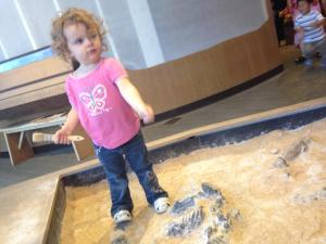 Brontësaurus uncovers dinosaur fossils.