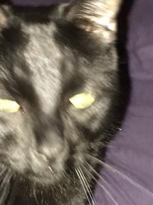 Creepy-ass cat