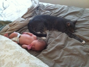 I'm just an innocent baby, napping with the cat. Nothing to see here.