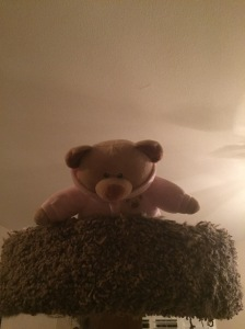 Pink Bear climbs the Forbidden Cat Tree
