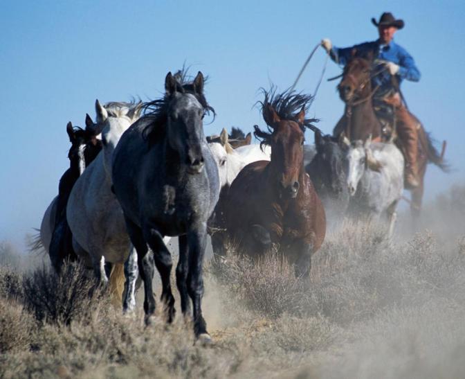A Cowboy Vigilante Lassoes a Bike Thief in the Beaver State