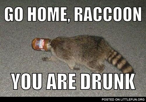 drunkraccoon.jpg