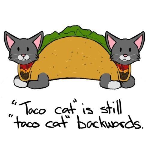 taco cat backwards.jpg