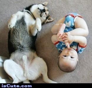 dog baby.jpg