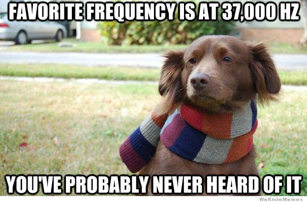 hipster-dogs-favorite-frequency.jpg