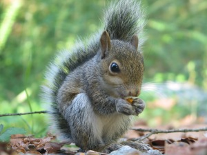 Squirrel 6